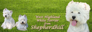 West Highland White Terrier from Shepherdhill-Banner